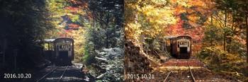 森林鉄道 紅葉 比較.jpg